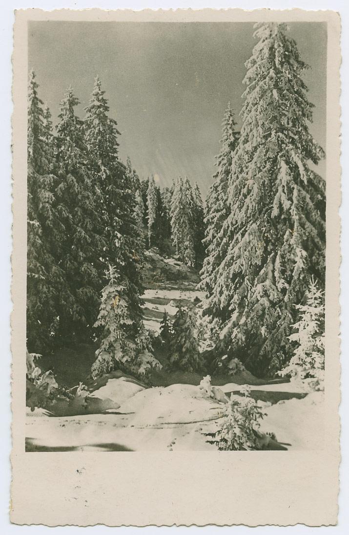 0833b-Rakvere-Krakau-1942-Ansichtskarte-unzulassig-postiajalugu-ee
